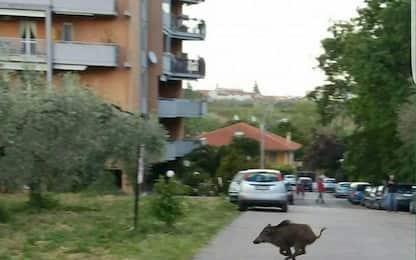 Abruzzo e Molise,18 mesi 160 incidenti con animali investiti