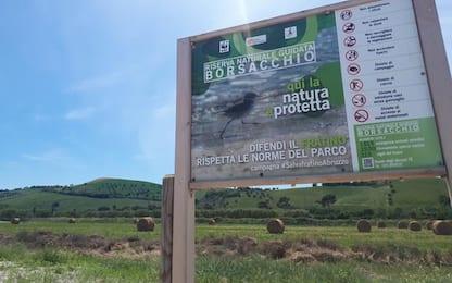 'Casa Verde' pericolosa in Riserva Borsacchio, allarme Guide