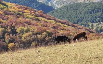 Montagna, Cai L'Aquila,confermato Consiglio Direttivo uscente