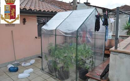 Piante marijuana su terrazzo, denunciato