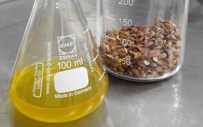 Dai semi di mela olio green e per usi alimentari e cosmetici