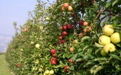 Agricoltura: in Trentino 1.439 richieste di lavoro