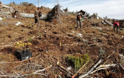 Vaia: 1,5 milioni di nuovi alberi per proteggere territorio