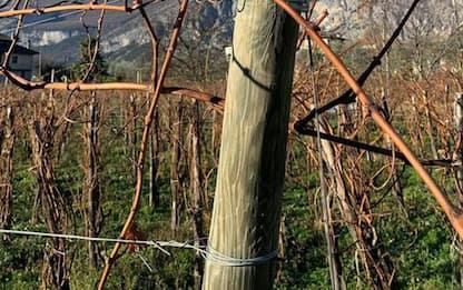 Agricoltura: al via 'Talking Vine', la vigna si racconta
