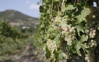 Vino: Trentino Regione vitivinicola dell'anno