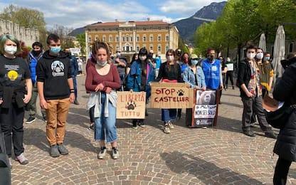 Corteo a Trento per la liberazione degli orsi del Casteller