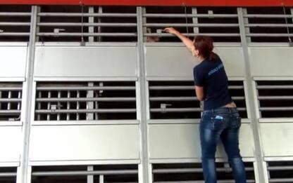 Sequestrati 39 cuccioli illegali, valore 60 mila euro