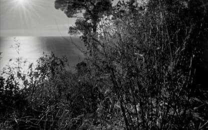 """Mostre: """"Un soffio di luce"""" di Tolotti in diretta streaming"""