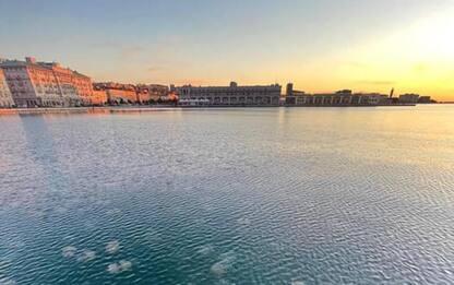 Le meduse 'invadono' Trieste in maniera eccezionale