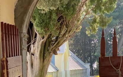 Covid: con zona arancione riapre Parco del Castello Miramare