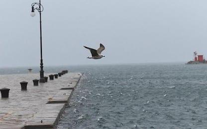 Maltempo: a Trieste raffiche di bora sfiorano i 100 km orari