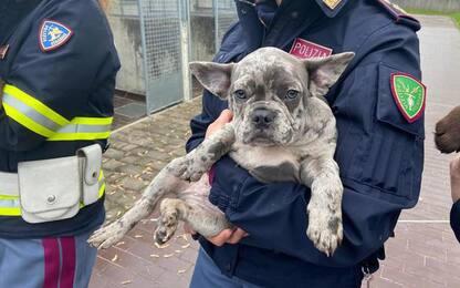 Cuccioli cane dalla Serbia stipati in furgone, una denuncia