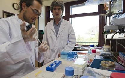 Intesa: sostegno a ricerca universitaria contro il Covid-19