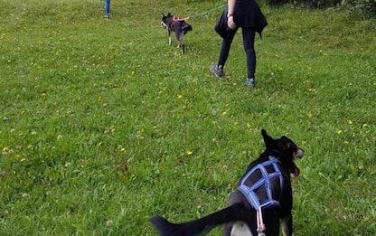 Cortina sempre più pet friendly,ora anche con cani da slitta