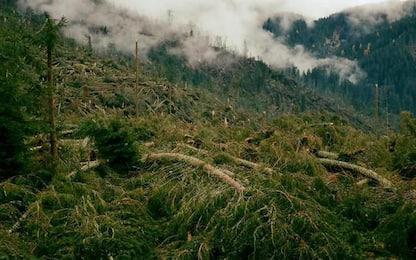 Vaia: due anni la tempesta che devastò la montagna