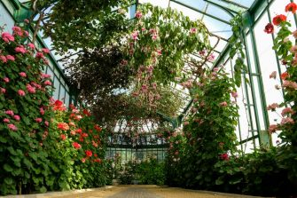 Geranium and fuchsia plants are seen during a press visit to the greenhouses of the Royal Castle at  Laeken in Brussels on April 20, 2018, ahead of their opening to members of the public after which they can be visited from April 21 till May 11. (Photo by DIRK WAEM / BELGA / AFP) / Belgium OUT        (Photo credit should read DIRK WAEM/AFP via Getty Images)