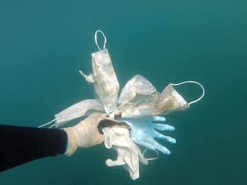 """Coronavirus, in mare ci saranno """"più mascherine che meduse"""""""