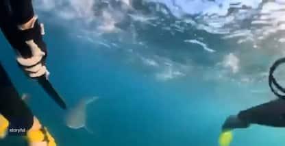 Australia, incontro tra due piccoli sub e uno squalo. VIDEO