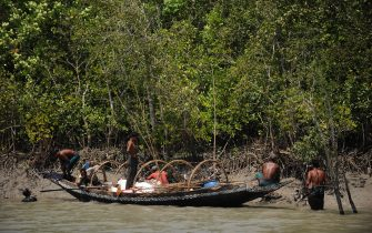 """Bangladeshi honey collectors 'Mowali' prepare to collect honey in a mangrove forest of The Sundarbans near Khulna some 350kms south west of Dhaka on April 2, 2009. The Sundarbans is the largest single block of tidal halophytic mangrove forest in the world. """"Sundarban"""" literally means """"beautiful jungle"""" or """"beautiful forest"""" in the Bengali language. The name Sundarbans may also have been derived from the Sundari trees that are found in Sundarbans in large numbers. The forest lies at the sweaty feet of the Ganges and is spread across areas of Bangladesh and West Bengal, India, forming the seaward fringe of the delta. The seasonally-flooded Sundarbans freshwater swamp forests lie inland from the mangrove forests. The forest covers 10,000 sq.km of which about 6,000 are in Bangladesh. It became inscripted as a UNESCO world heritage site in 1997. AFP PHOTO/Munir uz ZAMAN (Photo credit should read MUNIR UZ ZAMAN/AFP via Getty Images)"""