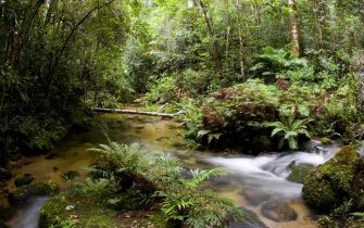 AUSTRALIA - FEBRUARY 26:  Windmill Creek at Mount Lewis State Forest in the Daintree Rainforest, Queensland, Australia.  (Photo by Tim Graham/Getty Images)