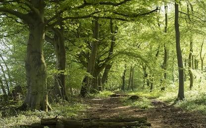 Foreste, in Europa assorbono il 20% delle emissioni fossili. FOTO