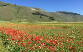 fioritura castelluccio norcia