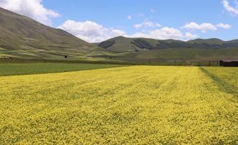 A general aerial view of the fields of Castelluccio di Norcia, offering a breathtaking flowering lanscape, considered a unique view in the world, in Castelluccio di Norcia, Umbria, Italy, 06 June 2020.   ANSA/GIANLUIGI BASSILETTI