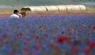 PERUGIA, ITALY - JULY 10:  People walk in the fields during the annual blossom in Castelluccio on July 10, 2018 in Castelluccio di Norcia near Perugia, Italy.  (Photo by Giuseppe Bellini/Getty Images)