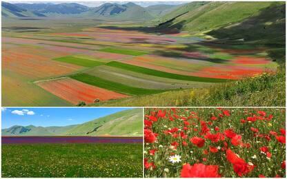 Castelluccio di Norcia, lo spettacolo della fioritura multicolor. FOTO