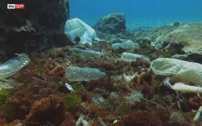 """""""Odissea Plastica"""",  l'impatto della plastica sul nostro ecosistema"""