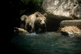 """ROME, ITALY - JUNE 25: A Brown Bear plays in the water to cool off during a heat wave at the """"Bioparco"""" (Rome zoo), on June 25, 2019 in Rome, Italy. (Photo by Antonio Masiello/Getty Images)"""
