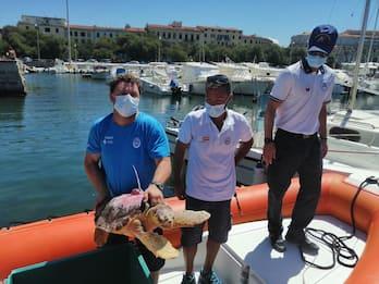 Livorno, torna in libertà la tartaruga Nanuk