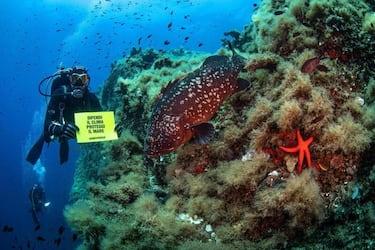 """Un momento delle operazioni di monitoraggio sugli ecosistemi marini costieri da parte di Greenpeace e del Distav (Dipartimento di Scienze della Terra, dell'Ambiente e della Vita) dell'Università di Genova nell'ambito del Progetto """"Mare Caldo"""" svolte all'Isola d'Elba dove la ong ambientalista si trova per la spedizione di ricerca """"Difendiamo il Mare"""", condotta con la barca Bamboo della Fondazione Exodus di don Mazzi, 20 Luglio 2020. ANSA/UFFICIO STAMPA/GREENPEACE/LORENZO MOSCIA  +++ NO SALES, EDITORIAL USE ONLY +++"""
