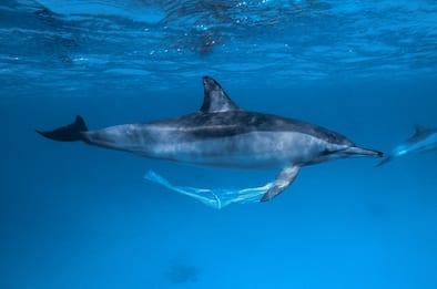 La plastica negli Oceani potrebbe triplicare entro il 2040. FOTO