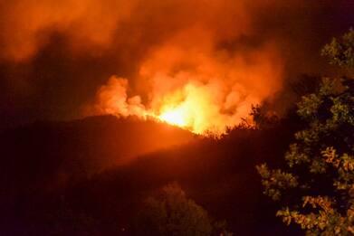 Incendi, Coldiretti: per ripristinare i boschi necessari 15 anni