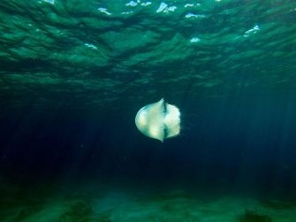 A jellyfish swims off the coast of Protaras on the south east coast of Cyprus on March 25, 2017. / AFP PHOTO / Emily IRVING-SWIFT        (Photo credit should read EMILY IRVING-SWIFT/AFP via Getty Images)