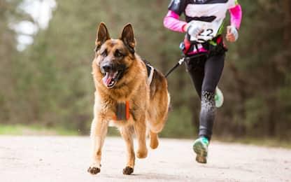 Dog sport, le regole per mantenersi in forma con il proprio cane
