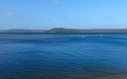 Tasmania, 70 balene spiaggiate. Corsa contro il tempo per aiutarle