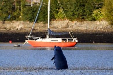 """Scozia, balene """"resistono"""" a esercitazione Nato. FOTO"""