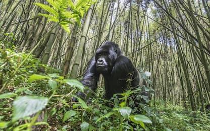Congo: sei ranger uccisi nel parco nazionale Virunga