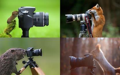 Gli animali si improvvisano fotografi: le foto più divertenti