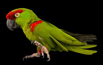 """Endangered Colour"", progetto di OPPO e National Geographic"