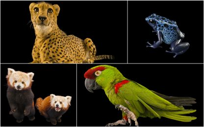 """Endangered Colour"", progetto per mostrare bellezza specie rare. FOTO"