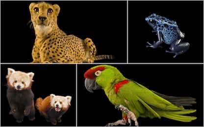 """""""Endangered Colour"""", progetto per mostrare bellezza specie rare. FOTO"""