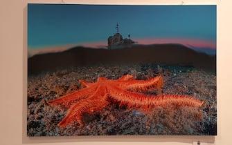 """Una stella marina ritratta in una foto alla mostra """"Il mare chiama chi ama ilmare"""""""