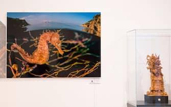 """Un ippocampo in una foto alla mostra """"Il mare chiama chi ama ilmare"""", a Sorrento"""