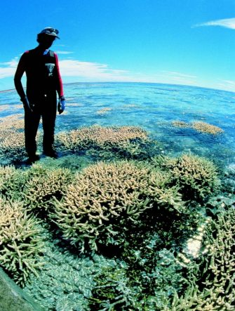 """Undated file photo showing a Greenpeace diver inspecting corals of the Great Barrier Reef which they have warned 07 July 1999 could be destroyed early next century by global warming.  The threat is a phenomenon known as  """" coral bleaching """"  which occurs when water temperature rises, preventing the coral from reproducing fast enough.  EPA PHOTO AFP/GREENPEACE/ww/ag/uk / ANSA /"""