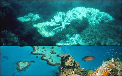 Unesco, Grande Barriera Corallina evita lista siti a rischio. FOTO