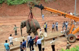 TOPSHOT - A tranquilized wild Indian elephant is lifted up with a crane as it is transported to the Amchang Wildlife Sanctuary after it wandered into a residential area in Sonapur on the outskirts of Guwahati, in Kamrup district in India's northeastern state of Assam on May 1, 2019. - A wild bull elephant caused a major stir in an Indian city, wandering along the busy streets and crowds of photo-snapping onlookers before being tranquilised, officials said. (Photo by STR / AFP)        (Photo credit should read STR/AFP via Getty Images)