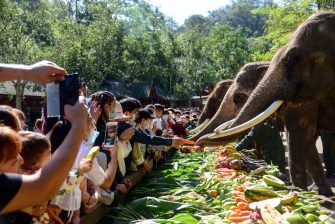 XISHUANGBANNA, CHINA - FEBRUARY 22: Tourists watch as elephants eat vegetables and fruit at the Wild Elephant Valley on February 22, 2021 in Xishuangbanna, Yunnan Province of China. (Photo by Li Ming/VCG via Getty Images)